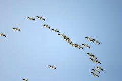 鸟 免版税图库摄影