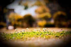 ηλιοφάνεια λουλουδιών κάτω από τις άγρια περιοχές Στοκ εικόνα με δικαίωμα ελεύθερης χρήσης