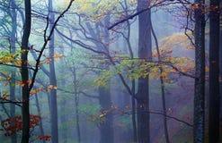 有薄雾的木头 库存照片