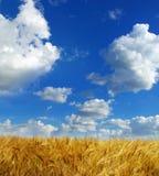 пшеницы Стоковое Изображение RF