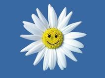 眼睛表面笑的黄牛白色 免版税库存图片