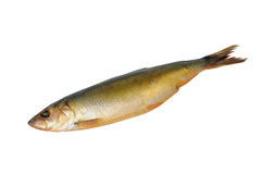 盐鲱鱼 免版税库存图片