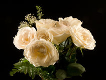красивейший желтый цвет роз Стоковая Фотография
