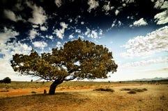南的澳洲 免版税库存照片