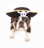 狗海盗 免版税库存图片