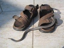 蛇蝎 免版税图库摄影