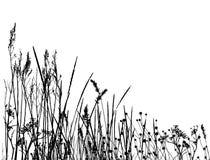 草实际剪影向量 免版税图库摄影