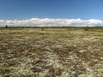 横向寒带草原 库存图片