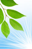 清洗绿色叶子 免版税图库摄影