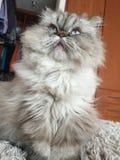猫 库存照片
