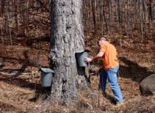 槭树季节糖 免版税库存照片