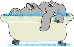 浴缸大象 免版税库存照片