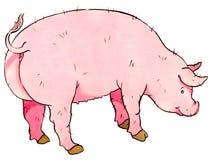 猪 向量例证