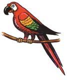 παπαγάλος πουλιών Στοκ Εικόνα