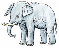 γκρι ελεφάντων Στοκ εικόνα με δικαίωμα ελεύθερης χρήσης