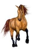 美丽的马 免版税库存照片