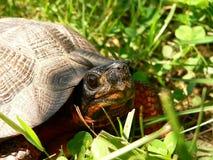 关闭乌龟木头 库存图片