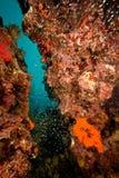 珊瑚鱼 图库摄影