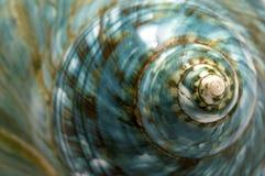μπλε κοχύλι θάλασσας Στοκ εικόνα με δικαίωμα ελεύθερης χρήσης