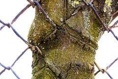 向内生长结构树 库存图片