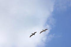 鸟 图库摄影