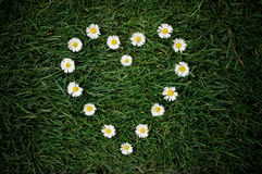 καρδιά μαργαριτών Στοκ φωτογραφία με δικαίωμα ελεύθερης χρήσης