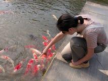 鲤鱼享用 免版税图库摄影