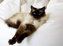 猫玩偶旧布 图库摄影