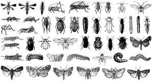 蝴蝶收集昆虫混杂的向量 免版税库存照片
