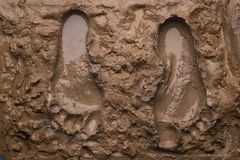 湿脚印的泥二 免版税库存照片
