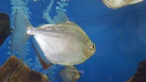 鱼 免版税图库摄影