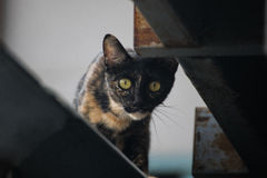 猫 免版税图库摄影