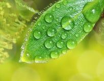 湿的接近的叶子 免版税库存照片