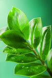 φρέσκα πράσινα φύλλα Στοκ εικόνες με δικαίωμα ελεύθερης χρήσης