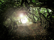 σήραγγα δέντρων Στοκ φωτογραφίες με δικαίωμα ελεύθερης χρήσης