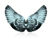 翼 库存图片