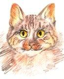 рука нарисованная котом Стоковые Изображения RF