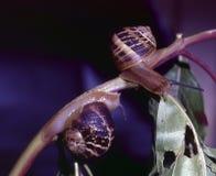 蜗牛二 库存照片