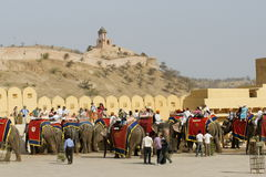 大象运输 免版税图库摄影