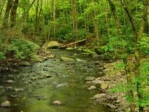 森林宾夕法尼亚春天流 库存照片