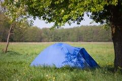 μπλε δέντρο σκηνών κάτω Στοκ φωτογραφίες με δικαίωμα ελεύθερης χρήσης