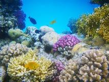 珊瑚困难红色礁石海运 免版税库存图片