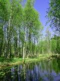 森林贞女 图库摄影