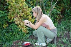 莓妇女 库存图片