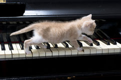 猫钢琴 免版税库存照片