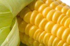新鲜的宏观玉米 免版税库存照片