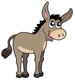 逗人喜爱的驴 库存照片
