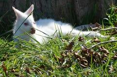 鼠 免版税图库摄影