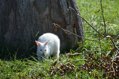 鼠 图库摄影