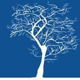 剪影结构树 库存照片
